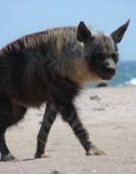 National Geographic – Hyena Coast 2014