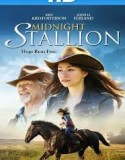 Midnight Stallion 2013